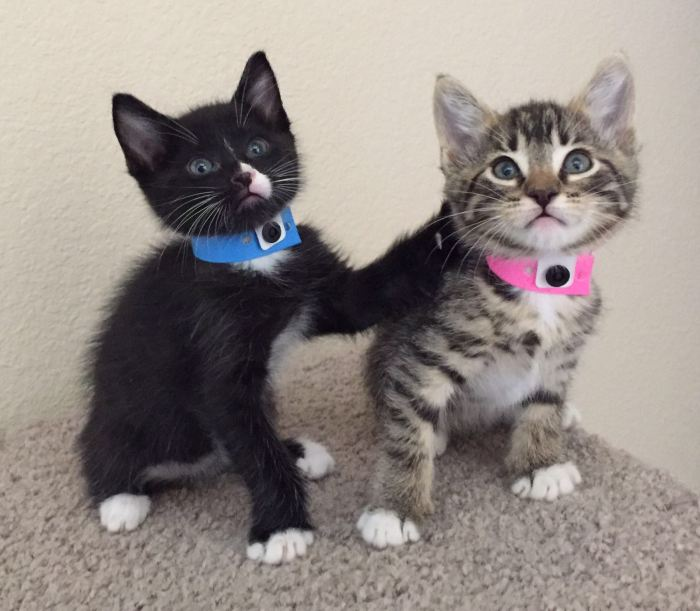 2-kittens