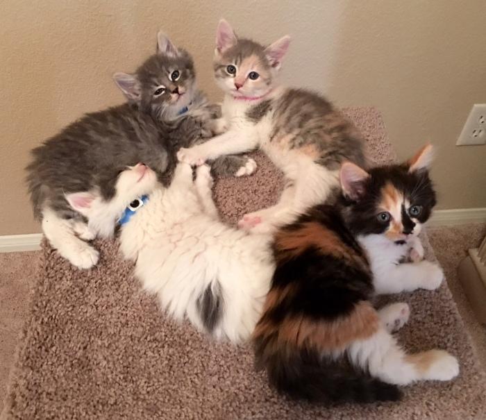 4-kittens