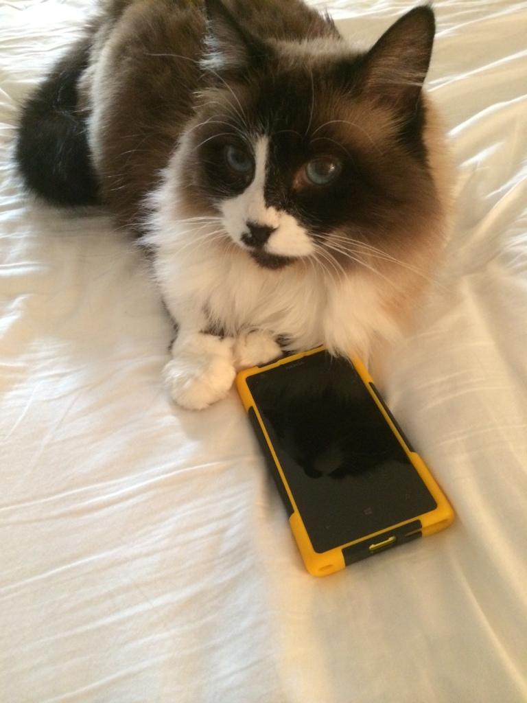 Bandit cat cell phone